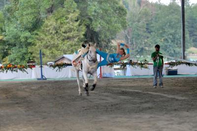 Acrobatic Horse