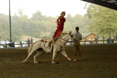 Horse Gymnist