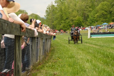SteepleChase2012CartHorse